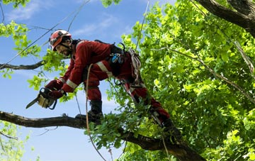 find trusted rated Fife tree surgeons