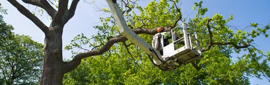 Fife tree surgery services