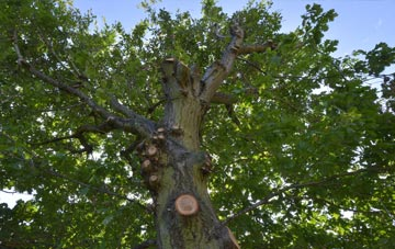 what is Fife tree surgery?